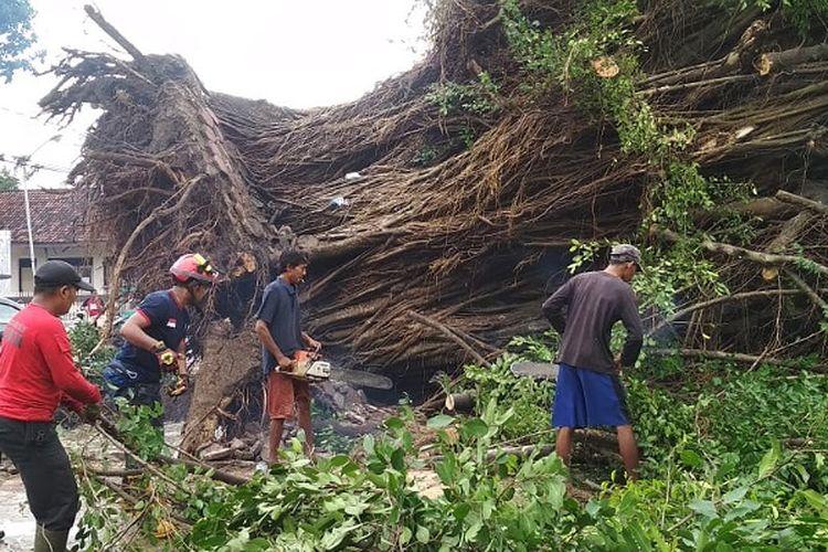 Tim Gabungan memotong pohon tua yang roboh di Alun-Alun Kota Pekalongan Jawa Tengah.