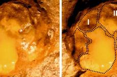 Jejak Bayi Gajah Prasejarah Ditemukan, Ungkap Bukti Perburuan Manusia Purba