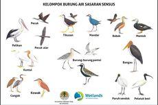 Inilah 20 Kelompok Burung Air yang Menjadi Sasaran Sensus
