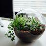 10 Pilihan Tanaman untuk Terrarium, Cantik dan Mudah Dirawat