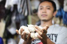 Menurut Pengamat, Ini Penyebab Produksi Bawang Putih RI Rentan Fluktuasi