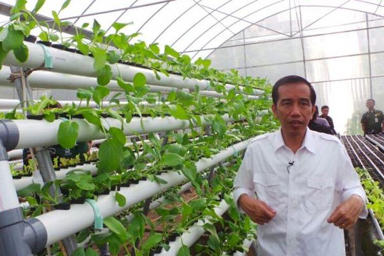 Greenhouse Rusun Marunda Yang Dimodali Jokowi Rp 450 Juta