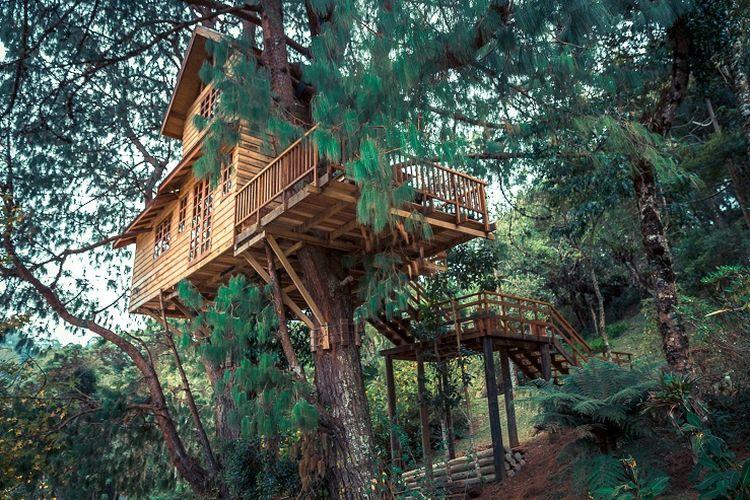 Ilustrasi rumah pohon.