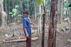 Satu Keluarga di Gunungkidul Keracunan Ubi Gadung, 1 Orang Meninggal