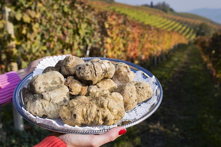 White truffle dari Piedmont, Italia.