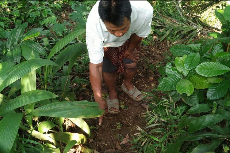 Warga menunjukkan bekas jejak binatang buas yang menyeret anak kambing di Kampung Karikil, Desa Cikurutug, Kecamatan Cireunghas, Sukabumi, Jawa Barat, Rabu (8/4/2020)