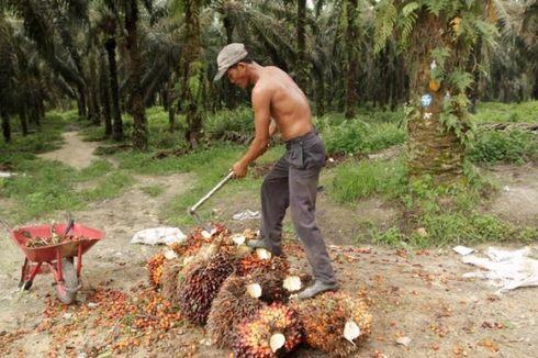 PTPN V Dorong Produktivitas Lahan Sawit Berkelanjutan