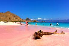 Kenapa Pasir Pink Beach di Flores, NTT Berwarna Merah Muda?