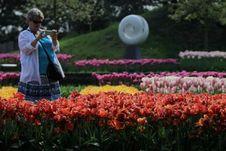 Cantiknya Taman Bunga Tulip di Belanda