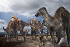 Bocah 12 Tahun Temukan Fosil