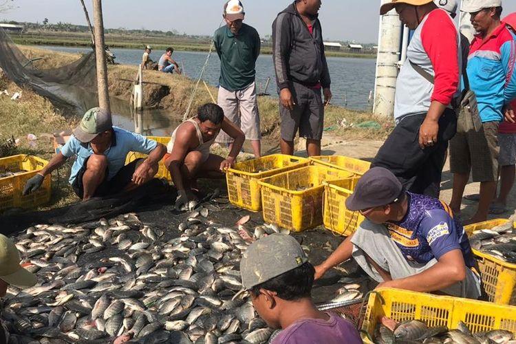 Para Nelayan saat mengumpulkan hasil tangkapannya untuk didistribusikan kepada pembudidaya ikan, pasar, dan masyarakat.