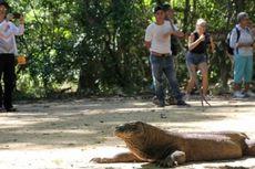 Wisata Super Premium Pulau Komodo untuk Pariwisata Berkelanjutan?
