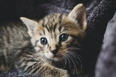 Tanda dan Gejala Kucing Sedang Sakit