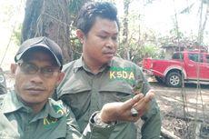 Burung Kolibri, Penyambung Rantai Kehidupan di Bangka Belitung, Terancam Punah