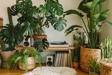 Tips Menata Pot Tanaman di Teras Rumah