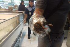 Viral, Tikus Besar Terjebak di Freezer Makanan Superstore di Lampung