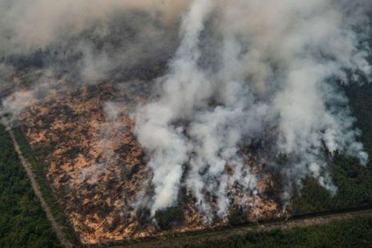 Sander Van Den Ende, Direktur Lingkungan dan Konservasi SIPEF - perusahaan yang mengakuisisi Deny Marker Indah Lestari pada 2017, menjelaskan bahwa pada karhutla 2015, cakupan lahan yang terbakar mencapai 4.817 hektare.