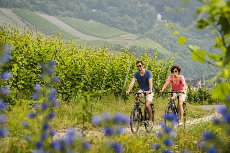 Suasana jalur bersepeda di Rhineland Palatinate.
