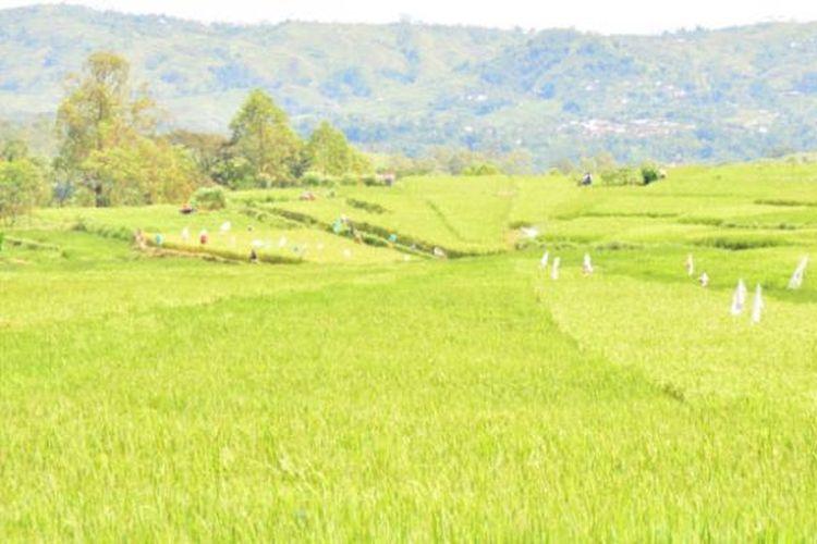 Ilustrasi sawah