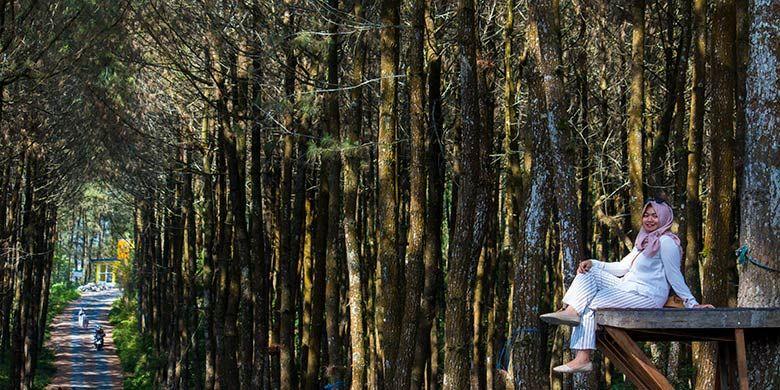 Top Selfie Pinusan Kragilan, Magelang menawarkan spot foto yang instagrammable bagi para pengunjungnya.