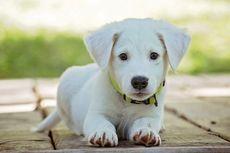 Tips Memberi Nama untuk Anjing Peliharaan