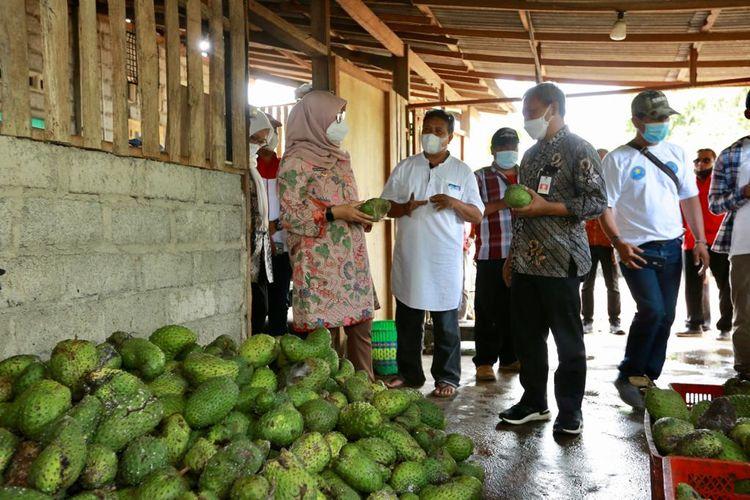 """Bupati Banyuwangi Ipuk Fiestiandani mengunjungi tempat Sucipto, pemilik usaha  """"Istana Sirsak, di Banyuwangi, Jawa Timur.."""