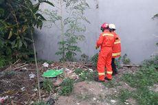 Ular Kobra Berkeliaran di Lingkungan Rumah, Warga Duren Sawit Resah