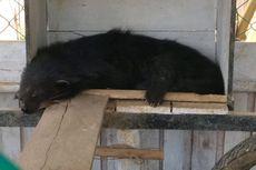 Taman Satwa Ilegal di Kalbar Dibongkar, Seorang Pemilik Ditangkap