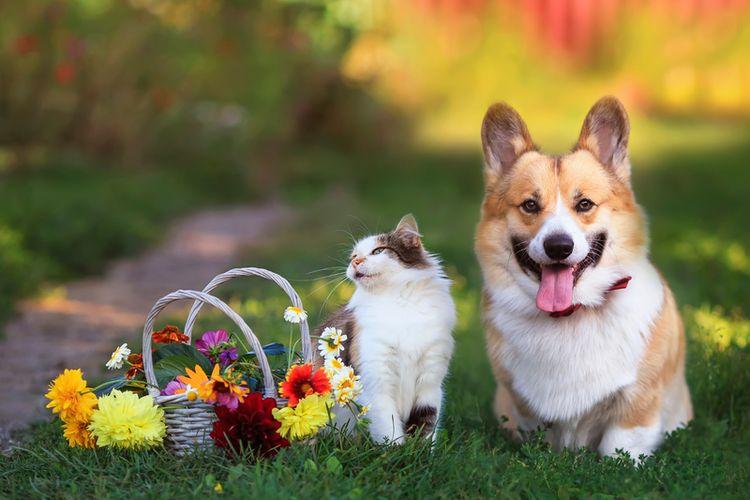 Ilustrasi anjing dan kucing di halaman rumah.