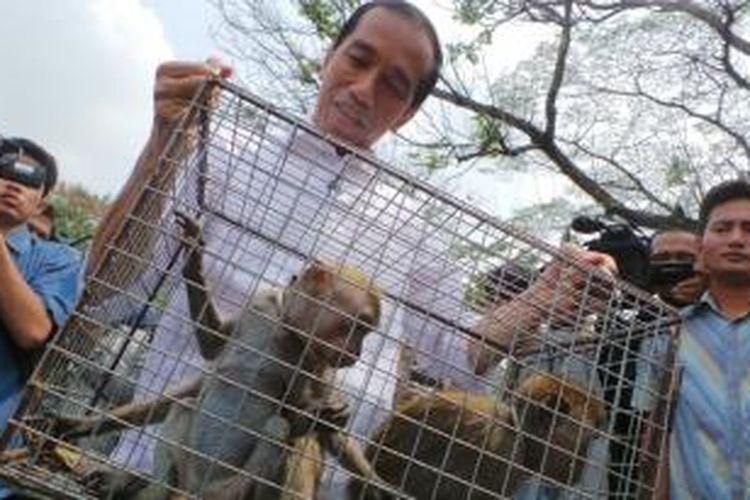 Gubernur DKI Joko Widodo mengangkat kandang berisi monyet di pelataran Monas, Rabu (23/10/2013). Monyet-monyet itu hasil razia Satpol PP terhadap topeng monyet di Jakarta.
