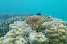 Menjelajahi Indahnya Kehidupan Bawah Laut di Pulau Bintan