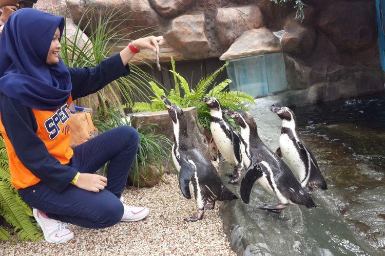 Salah satu pengunjung Eco Green Park, Kota Batu saat memberi makan penguin Spheniscus humboldti, Rabu (25/4/2018).