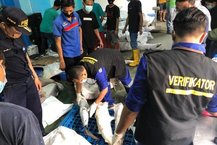 Penyitaan 374,5 kilogram ikan yang dilindungi dalam keadaan beku oleh BKIPM di Jakarta, Kamis (25/3/2021). Ikan tersebut terdiri dari hiu kikir, hiu martil, pari kikir dan pari liong bun beku.