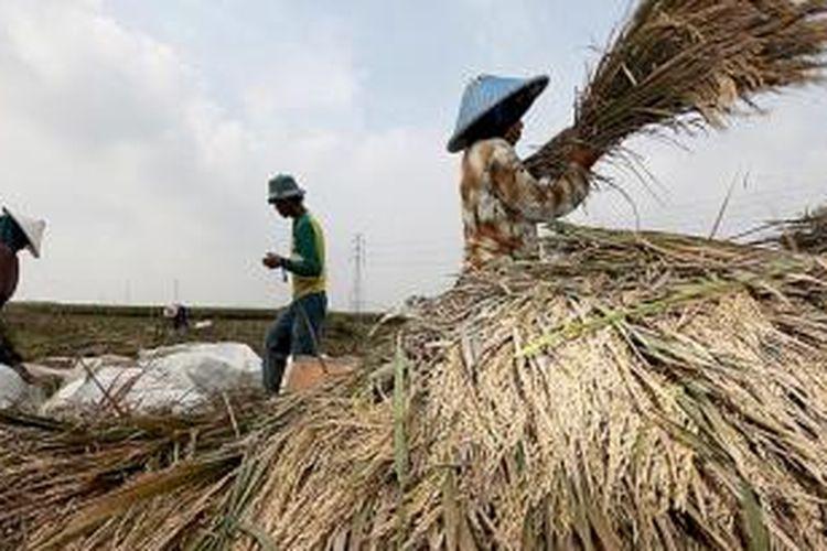 Harga beras yang mahal dalam sebulan terakhir membuat warga di Kabupaten Cirebon dan Indramayu, Jawa Barat, yang merupakan daerah penghasil padi nasional, kesulitan mendapatkan beras kualitas layak dengan harga terjangkau.