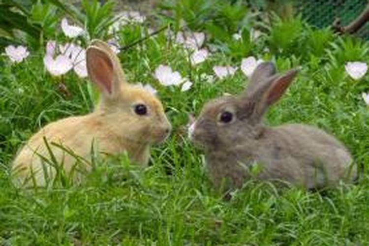 Pulau Okunoshima di Jepang dijuluki sebagai Pulau Kelinci karena dipenuhi dengan kelinci. Daya tarik yang membuat wisatawan datang ke pulau ini adalah kelinci.