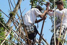 Tradisi Mekotek, Adu Nyali di Puncak Tumpukan Kayu pada Hari Raya Kuningan