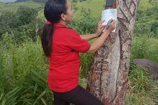 Kisah Guru di Pedalaman Manggarai Timur, Mendaki Bukit untuk Mendapat Sinyal Telepon dan Internet