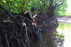 Potensi Kemaritiman Indonesia: Hutan Mangrove
