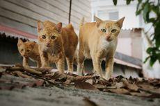 Kucing Cacingan? Kenali Ciri dan Cara Pencegahannya