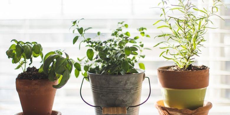 6 Tanaman Hias yang Cocok di Apartemen Kecil