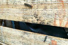 Warga Cimanggis di Depok Keluhkan Serbuan Ulat Bulu di Rumah Mereka
