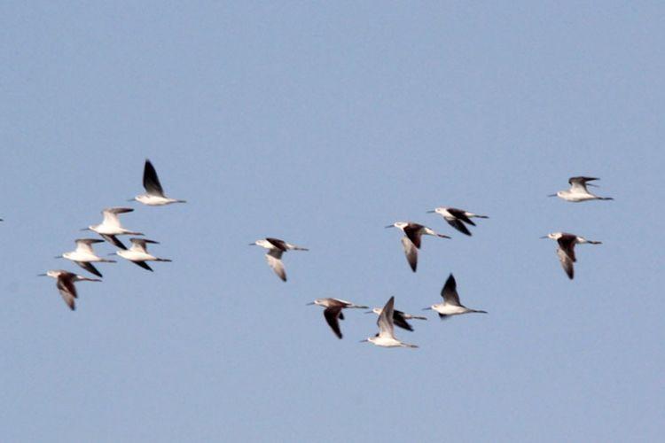 Download 45+ Foto Gambar Burung Terbang Sendiri HD Paling Keren Free