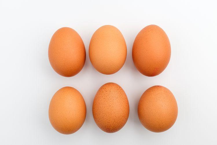 Ilustrasi telur, telur infertil