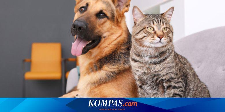 Anjing dan Kucing, Mana yang Lebih Pintar?