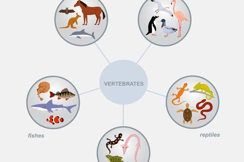 Sistem dan Alat Pernapasan Hewan
