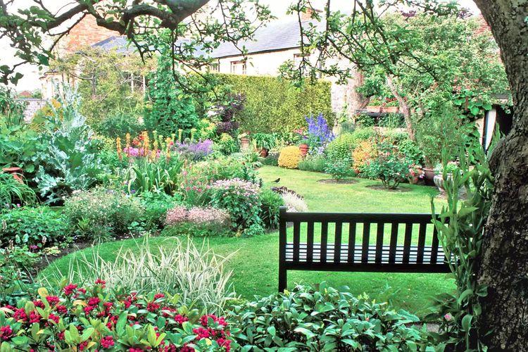 Ilustrasi kebun layaknya di hutan.