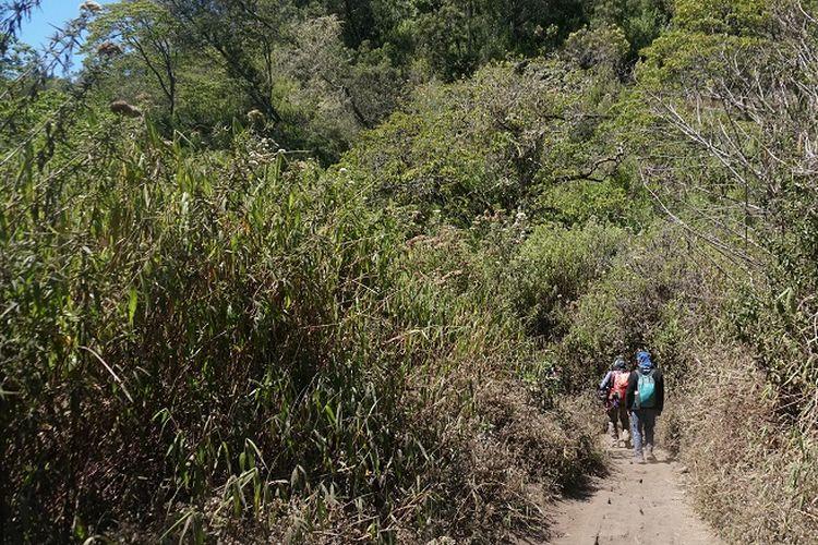 Pendaki melewati jalur pendakian Gunung Semeru, Jawa Timur, Rabu (18/9/2019). Gunung Semeru merupakan gunung tertinggi di Pulau Jawa dengan ketinggian sekitar 3.676 meter di atas permukaan laut.