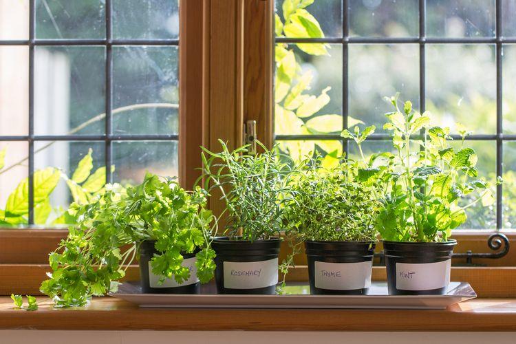 Ilustrasi berkebun di rumah, tanaman.