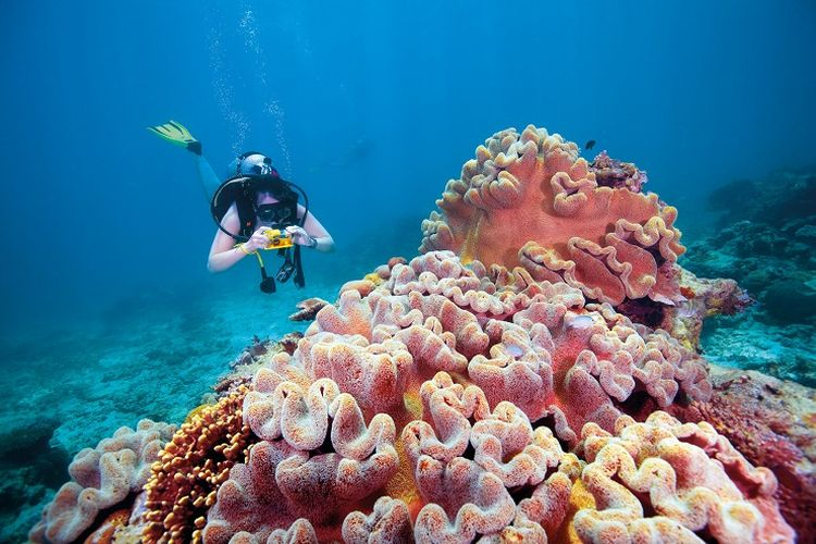 Keindahan bawah laut di Great Barrier Reef, Queensland, Australia