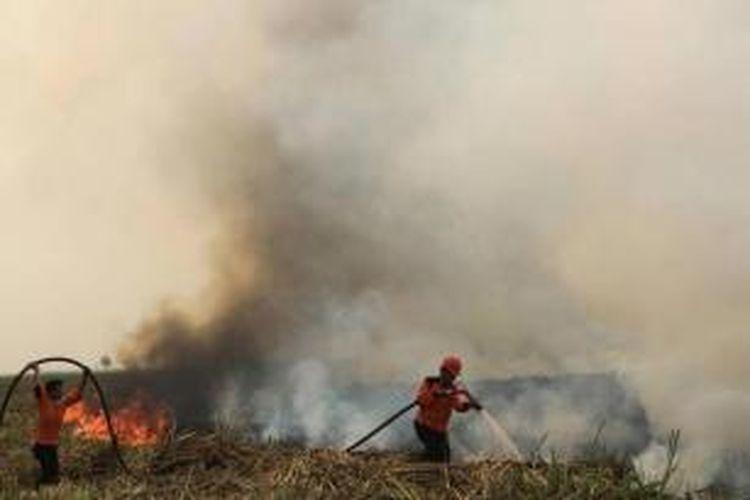 Petugas berupaya memadamkan kebakaran hutan di Ogan Ilir, Sumatera Selatan, 5 September 2015. Kabut asap kebakaran hutan dan lahan mulai menyebar ke negara tetanga di Asia  Tenggara.